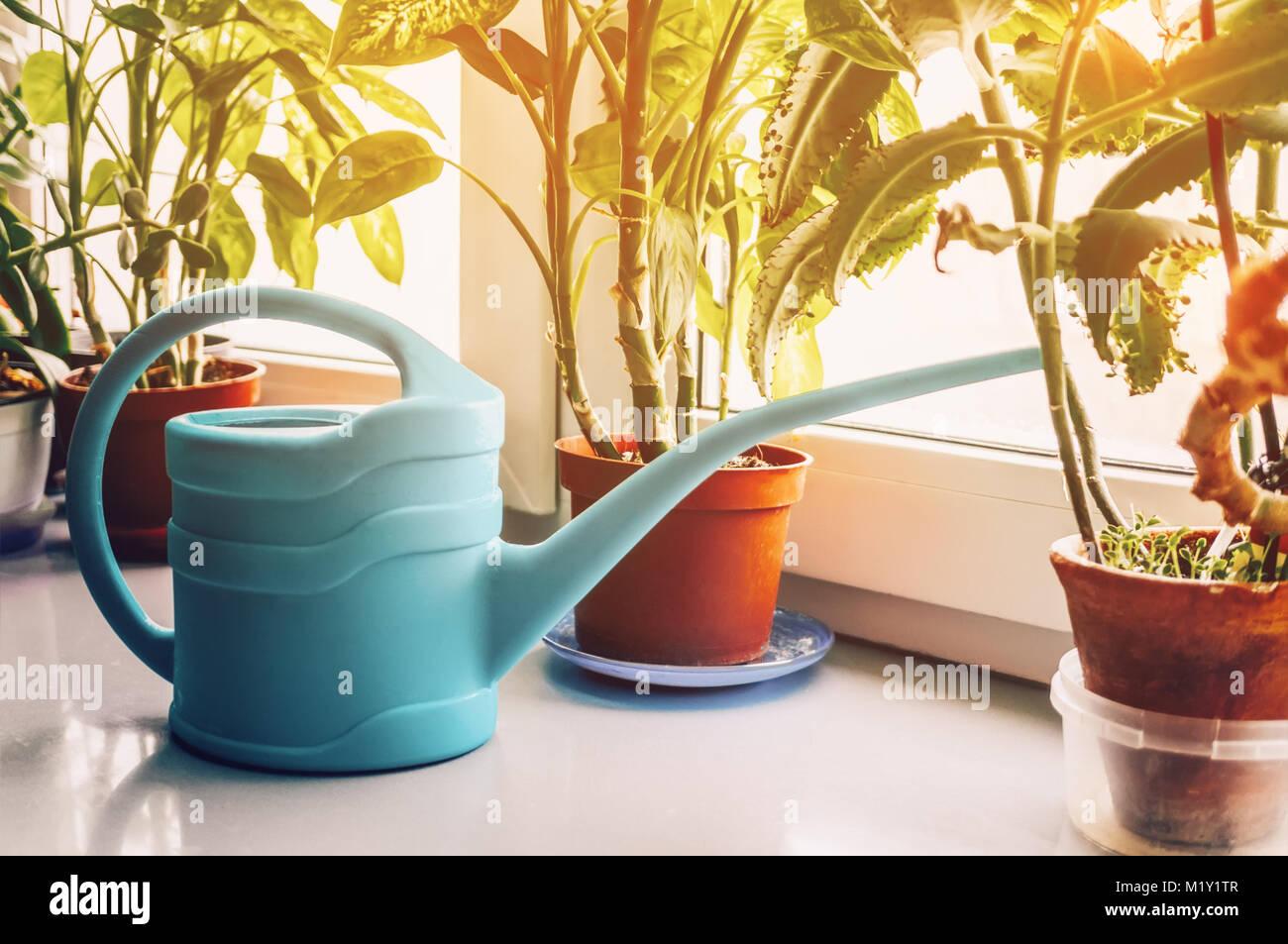 bewässerung gemüse sämlinge und zimmerpflanzen mit gießkanne
