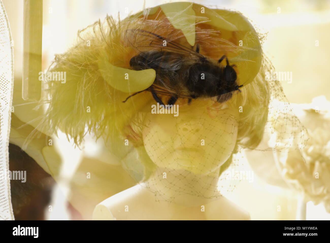 Double Exposure Puppen Kopf mit Insekt Stockbild