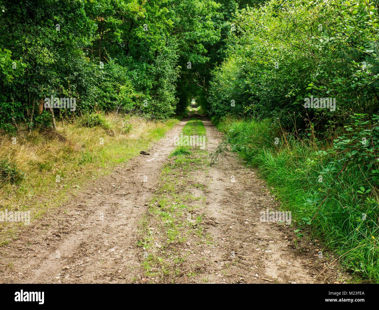 Waldweg in der Lüneburger Heide, Niedersachsen, Deutschland. Stockbild