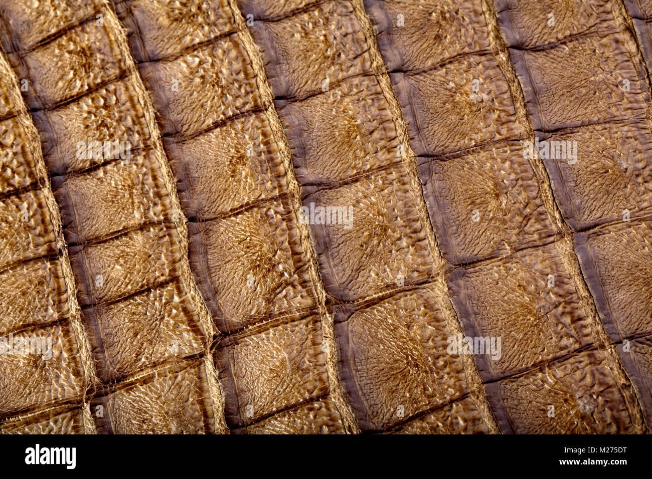 Handtasche aus echtem Krokodilleder Stockbild
