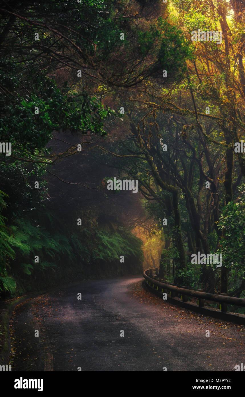 Straße in Magic nebligen Wald von Anaga ländlichen Park, Teneriffa, Kanarische Inseln, Spanien Stockfoto