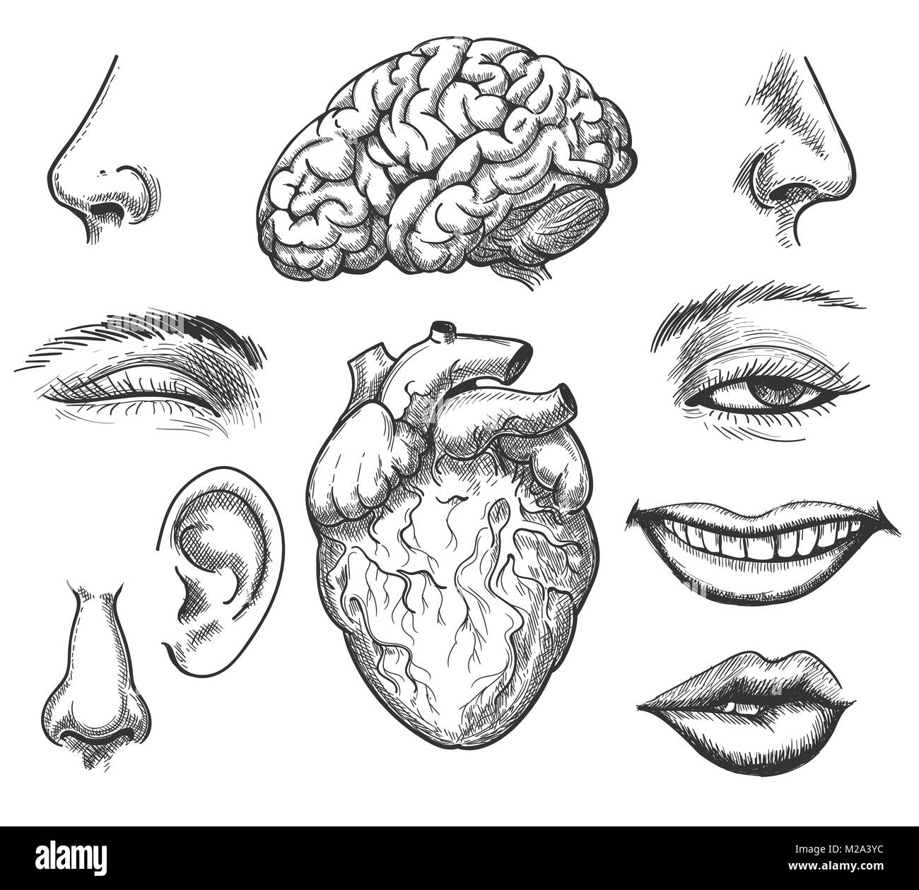 Menschliches Gesicht und Organe. Menschlichen Kopf Organ wie Auge ...