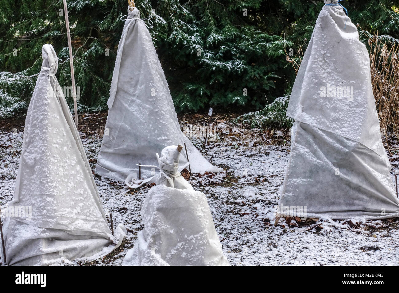 frost protection plants stockfotos frost protection plants bilder alamy. Black Bedroom Furniture Sets. Home Design Ideas