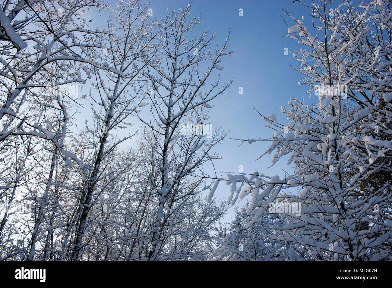 wald im winter b ume im schnee schnee m rchen natur stockfoto bild 173699333 alamy. Black Bedroom Furniture Sets. Home Design Ideas