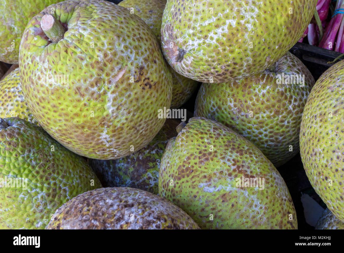 Die jamaikanische Brotfrucht essen Foto Stockbild
