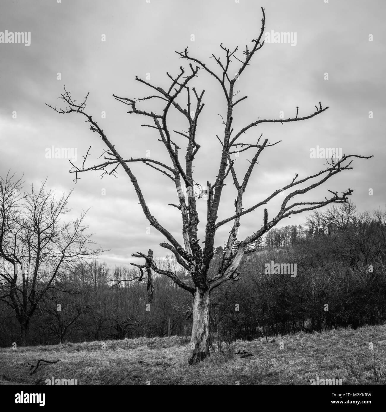 Der einsame Baum Stockbild