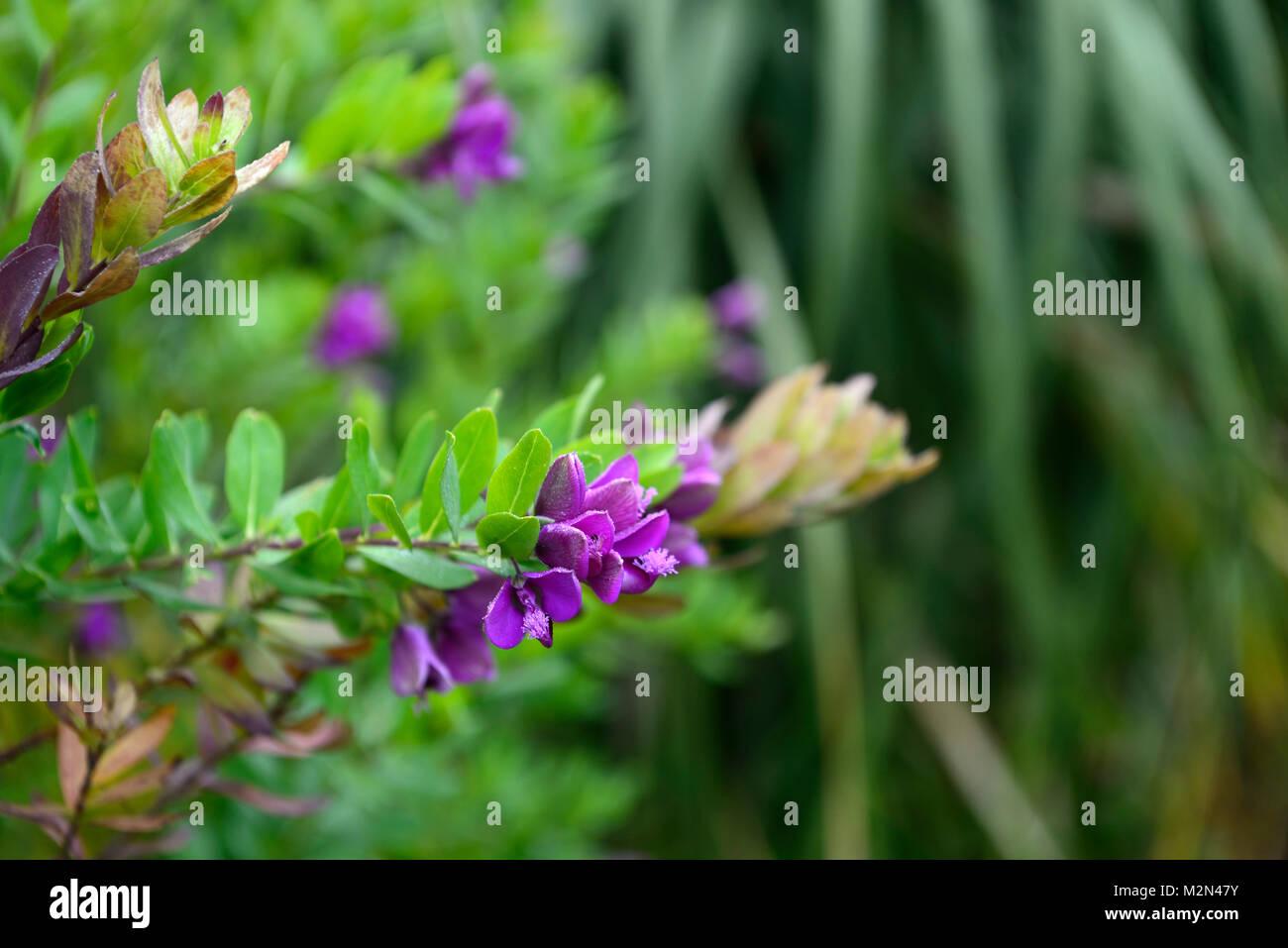 Welche Blumen Blühen Im September september bush stockfotos september bush bilder alamy