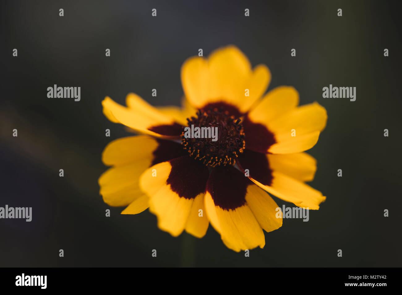 Blumen Bielefeld sommer blumen auf den straßen bielefeld stockfoto bild
