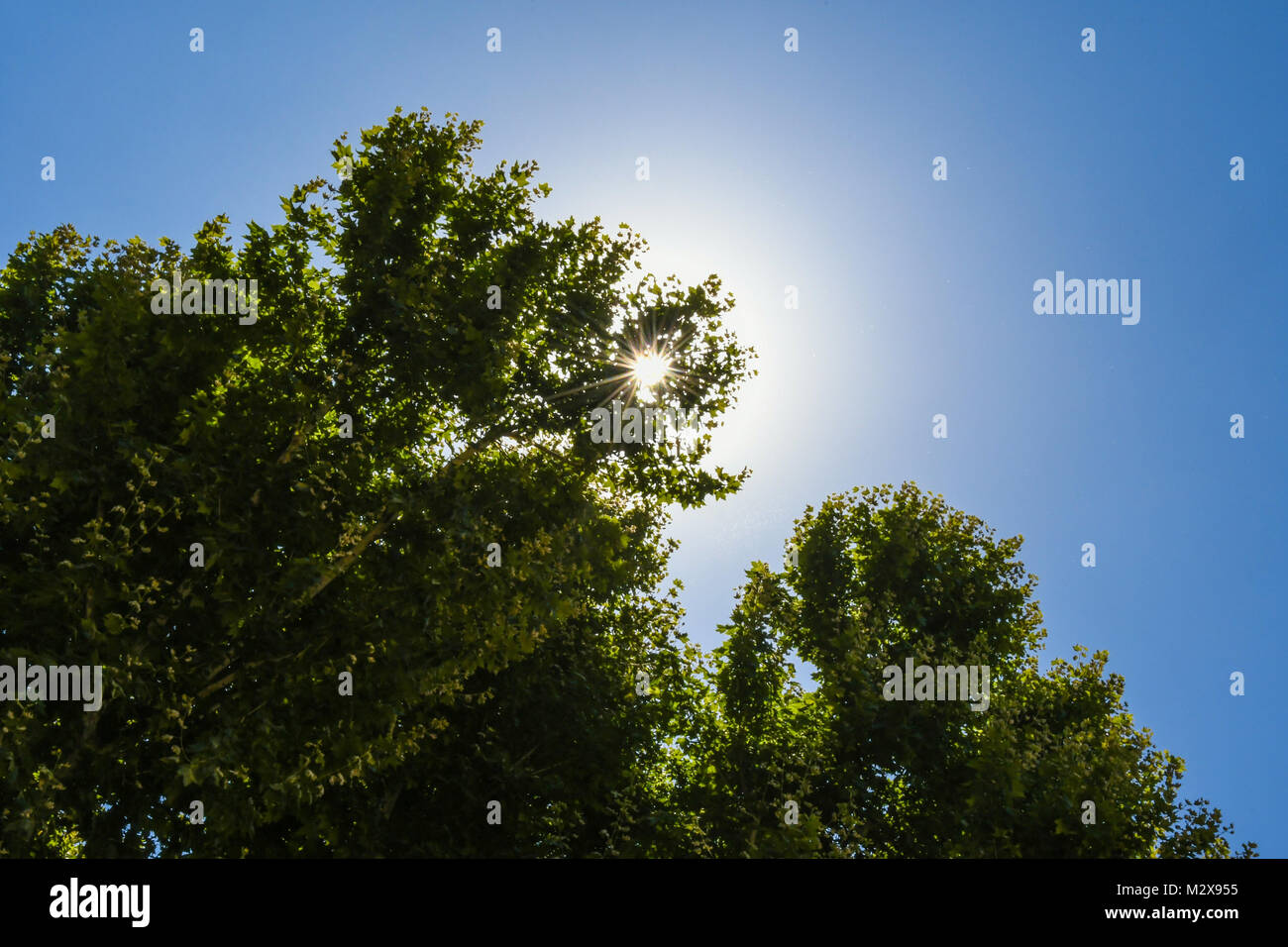 Sunburst durch die Tress in Rom, Italien Stockfoto