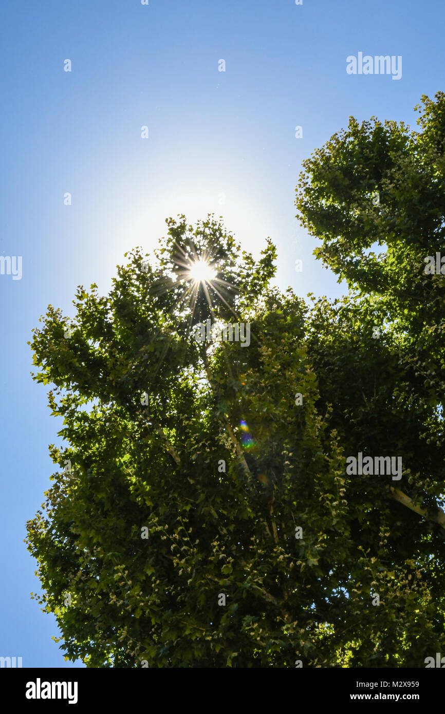 Sunburst durch die Tress in Rom, Italien Stockfoto