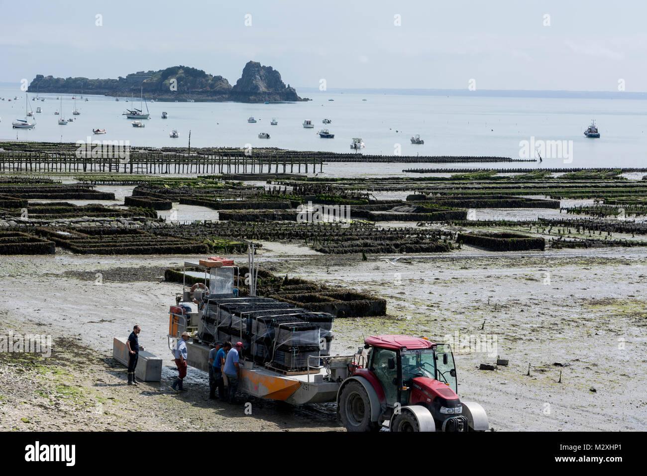 Cancale in der Bucht von Mont St. Michel mit seiner berühmten Austernzucht Stockbild