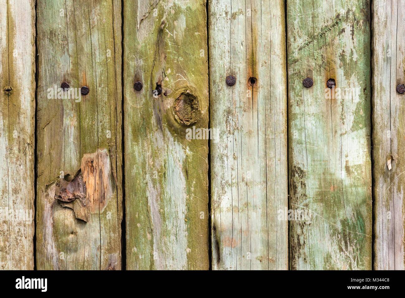 Holz Zaun Lamelle Lamellen Closeup Abschnitt Mit Metall Nagel Pilz