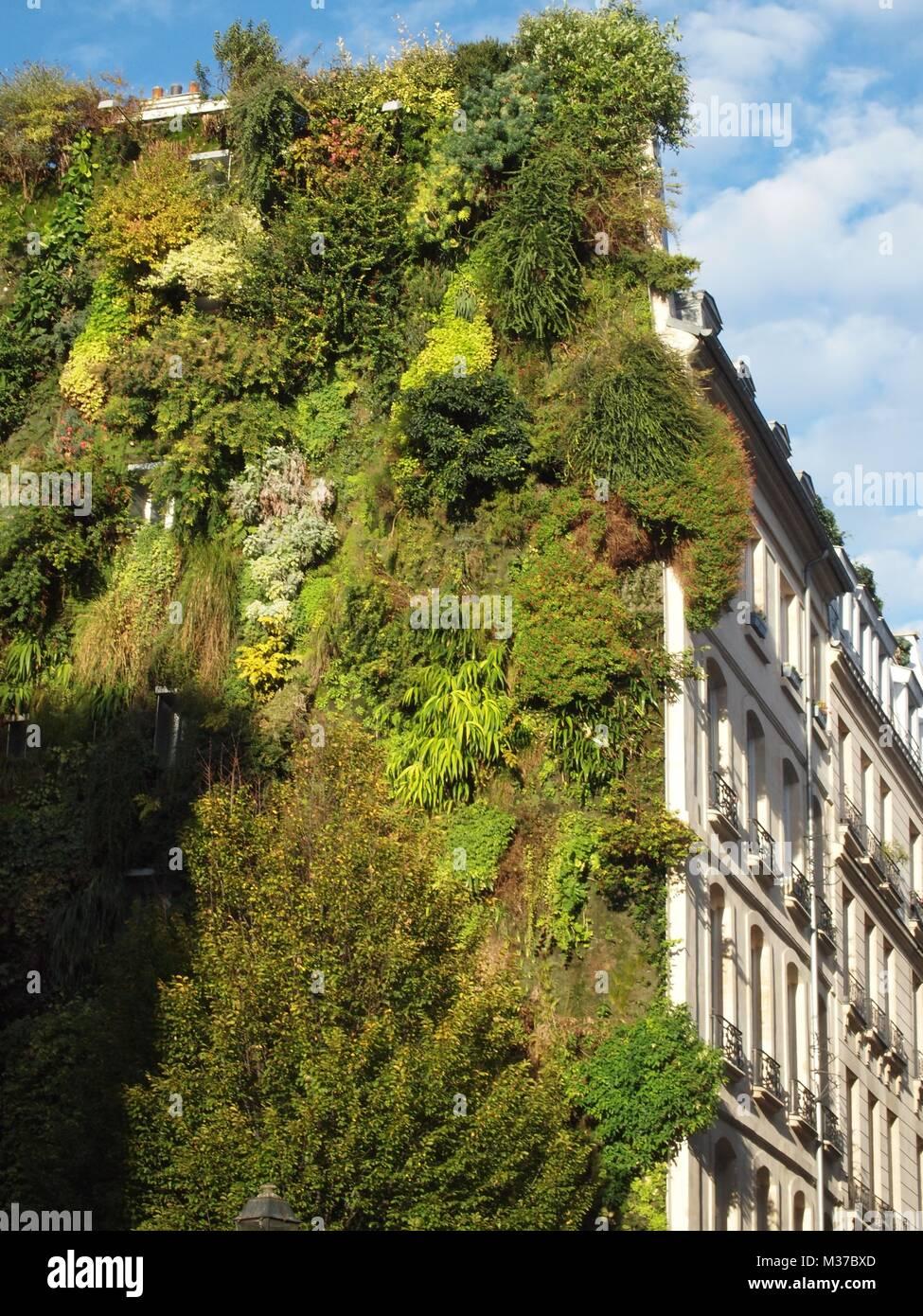 Eine Begrunte Wand Auf Einer Pariser Gebaude Stockfoto Bild