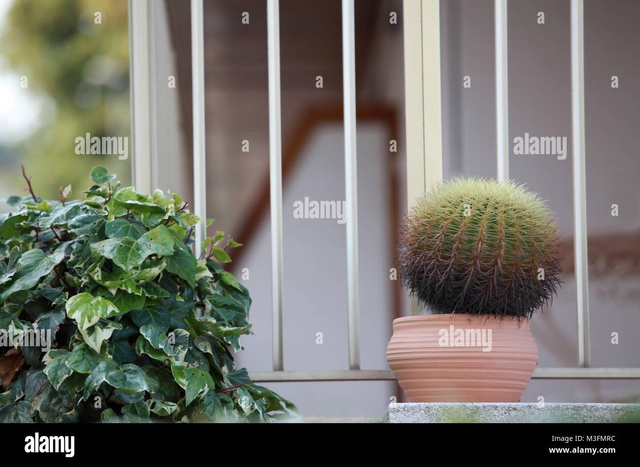 Kaktus Im Topf Auf Der Fensterbank Stockfoto Bild 174293264 Alamy