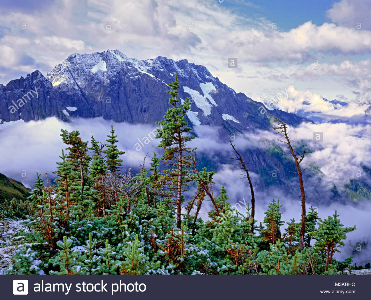 Subalpine Fir und Cascade Peak von Sahale Arm, North Cascades National Park, Washington Stockbild