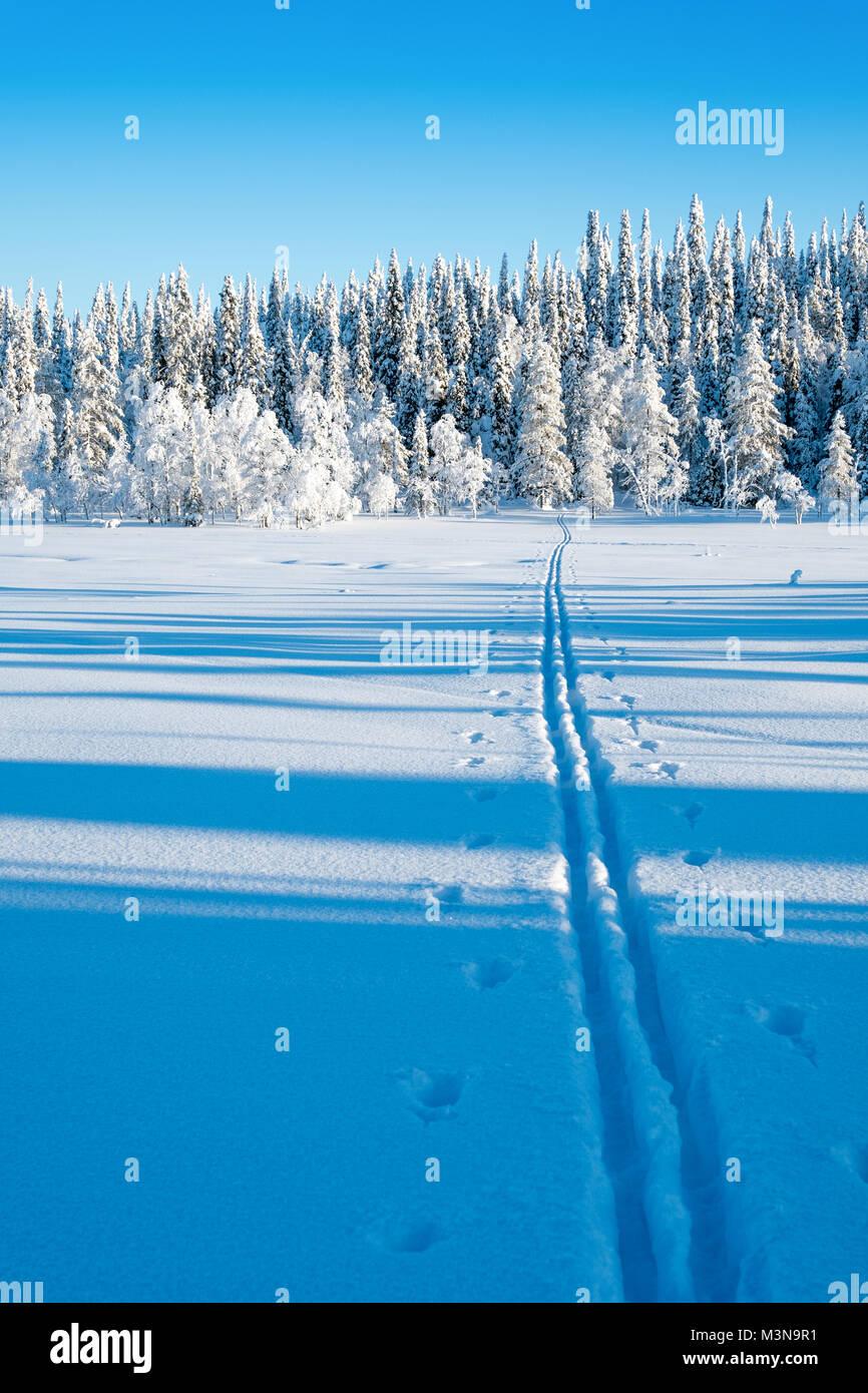 Langlaufloipen in den Wäldern rund um Ruka in Finnland Stockbild