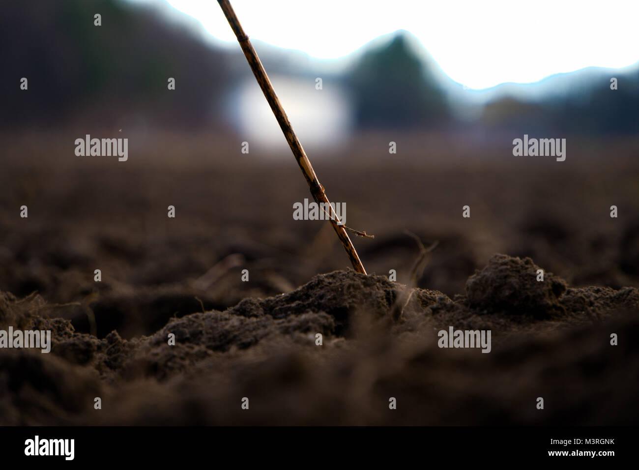 Lonely Stroh Stockbild