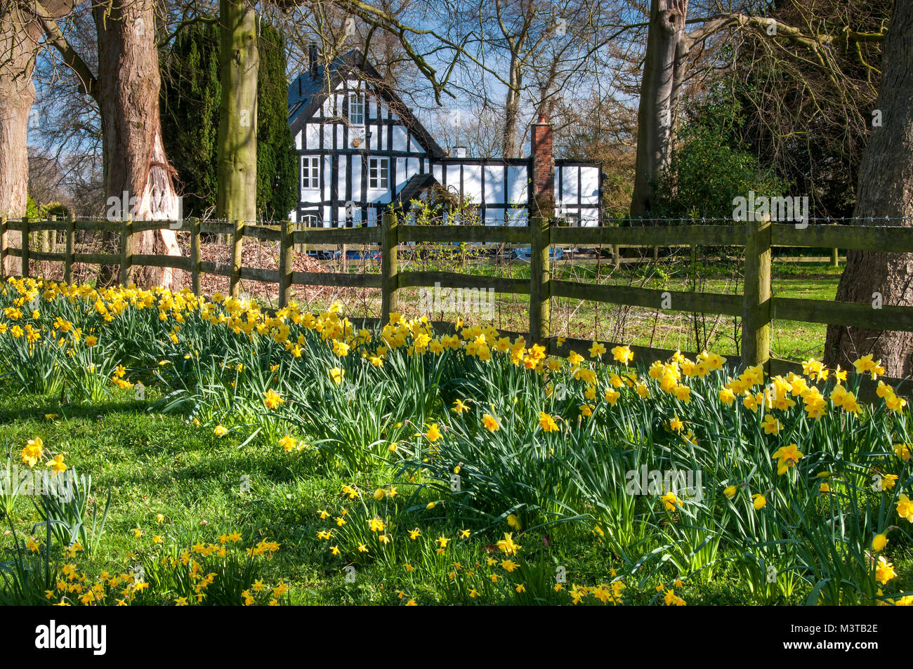 Das alte Pfarrhaus schwarze und weiße Fachwerkhaus im Frühjahr, Swettenham, Cheshire, England, Großbritannien Stockbild