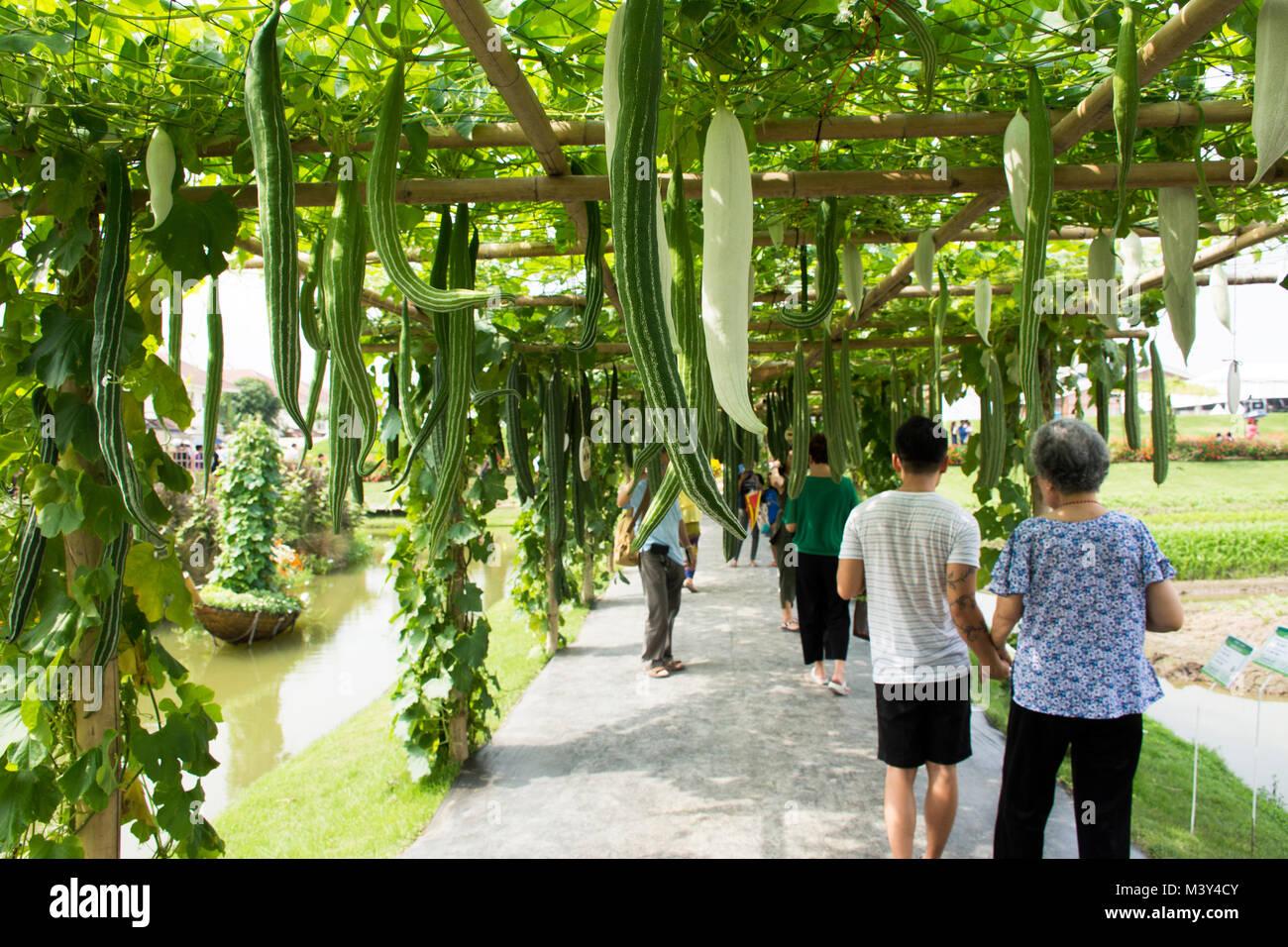 Reisende thai Menschen zu Fuß besuchen und Foto mit Shopping Produkt bei Gemüse- und Flora Festspiele am 19. November Stockfoto