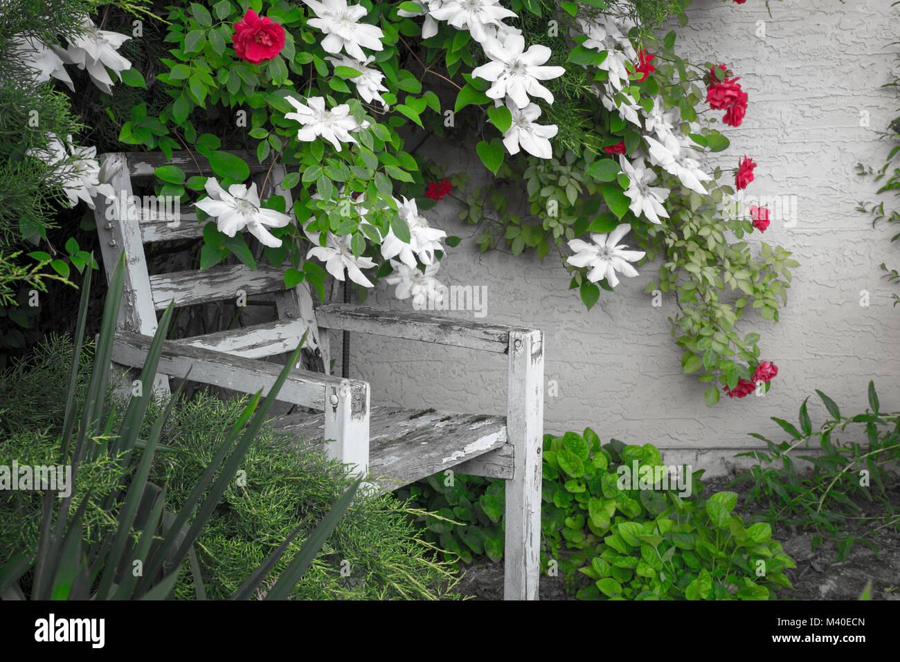 Verwittertes Holz Weißer Stuhl In Einem Garten Teilweise Durch