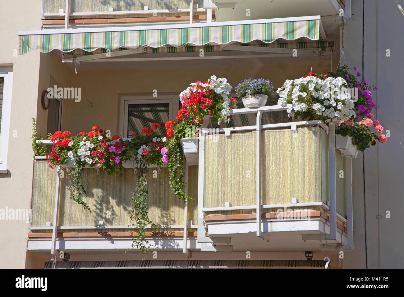 Balkon mit Geranien, Apartment Gebäude in der Innenstadt von Koblenz, Rheinland-Pfalz, Deutschland, Europa Stockbild