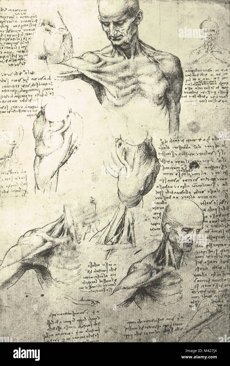 Anatomische Zeichnung von Leonardo Da Vinci, Hals und Schultern, ca ...