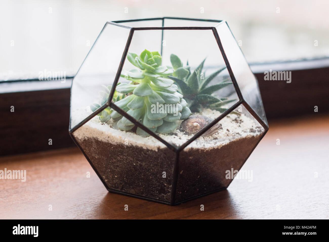 Mini Saftigen Garten In Glas Terrarium Auf Holz Fensterbank. Sukkulenten  Mit Sand Und Felsen Im Glaskasten. Home Dekoration Elemente