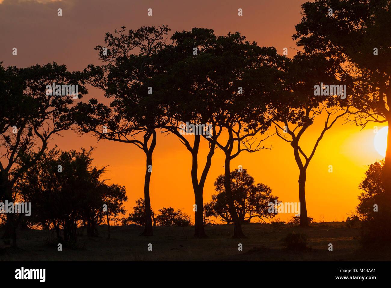 Serengeti Nationalpark, Tansania Stockfoto