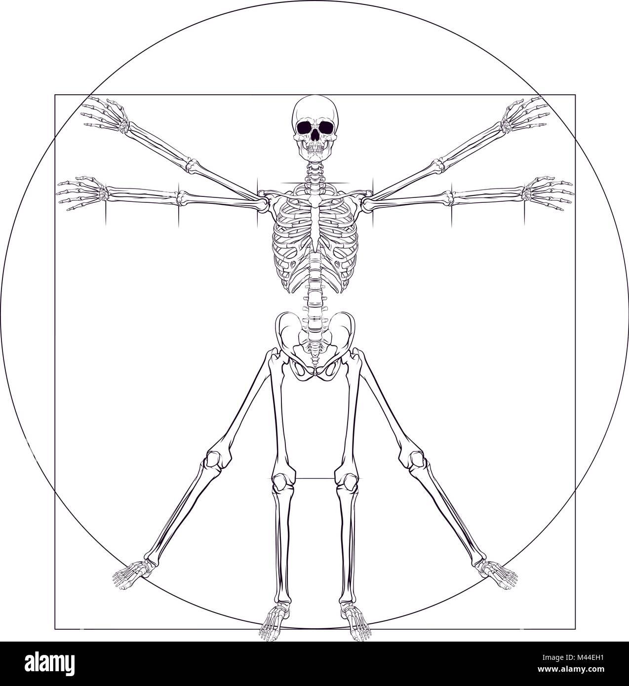 Großzügig Leonardo Menschliche Anatomie Ideen - Anatomie Ideen ...