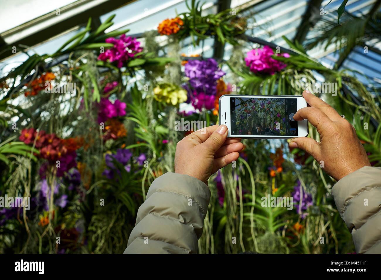 London/Großbritannien - 11. Februar 2018: Eine Person mit einem Smartphone Foto einen Bogen von bunten Orchideen Stockfoto