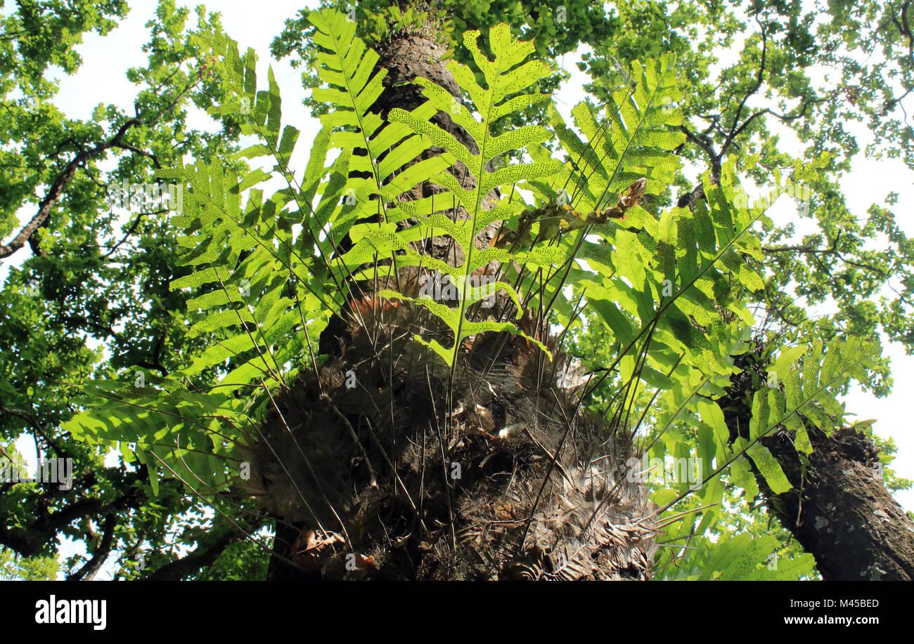 Parasitäre Pflanzen Stockbild