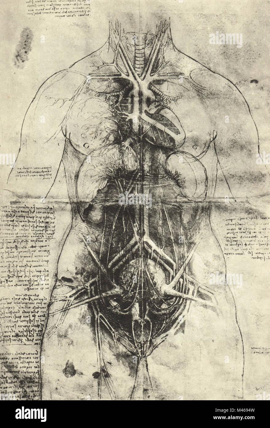 Zerlegung der arteriellen System und die wichtigsten Organe der Frau ...
