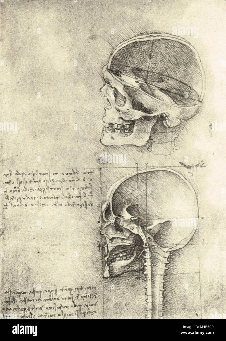 Zeichnung eines Schädel nach links, anatomische Studie des Schädels ...