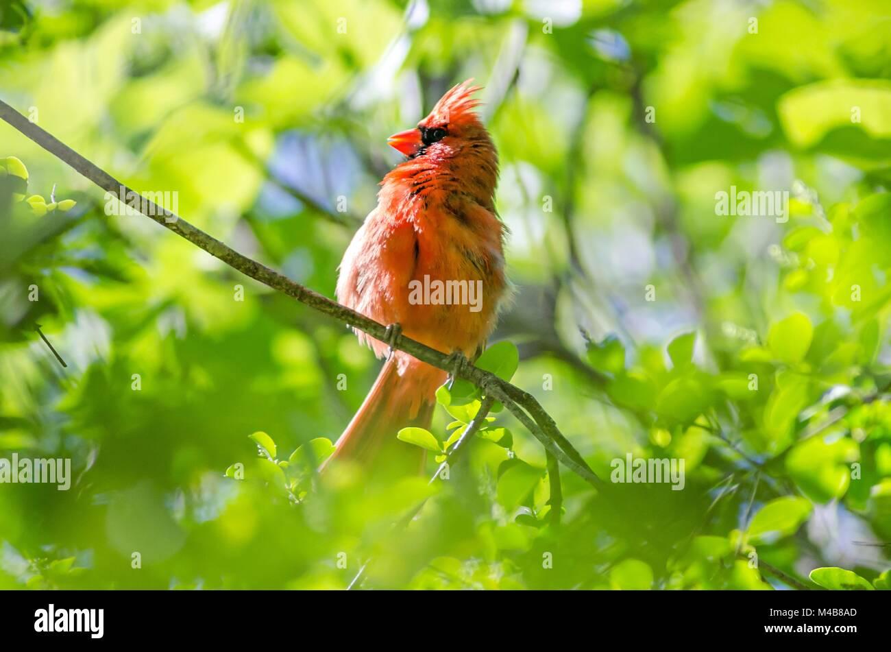 Nett Blaue Vogel Färbung Seite Fotos - Beispiel Wiederaufnahme ...