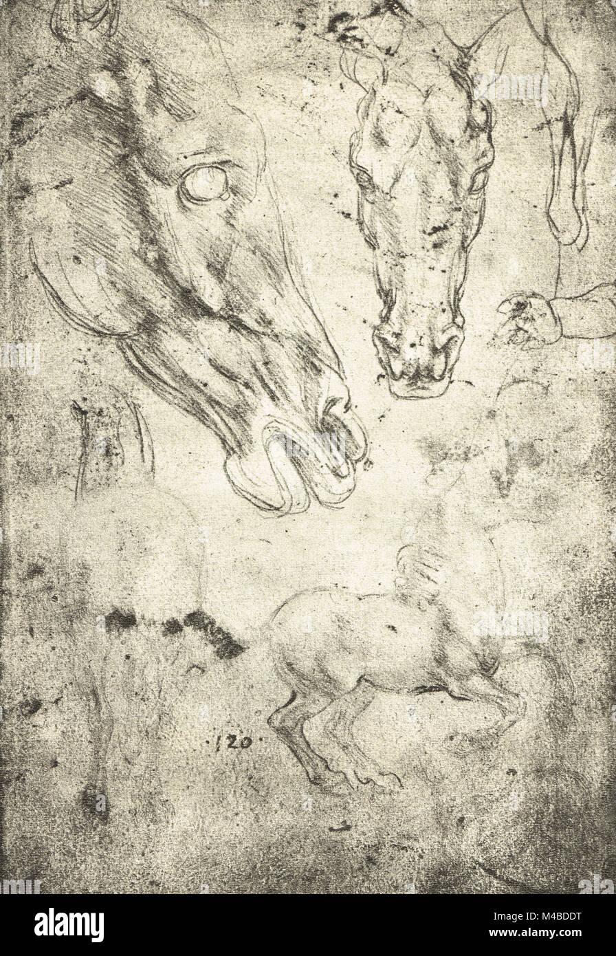 Fantastisch Leonardo Da Vinci Anatomie Entdeckungen Zeitgenössisch ...
