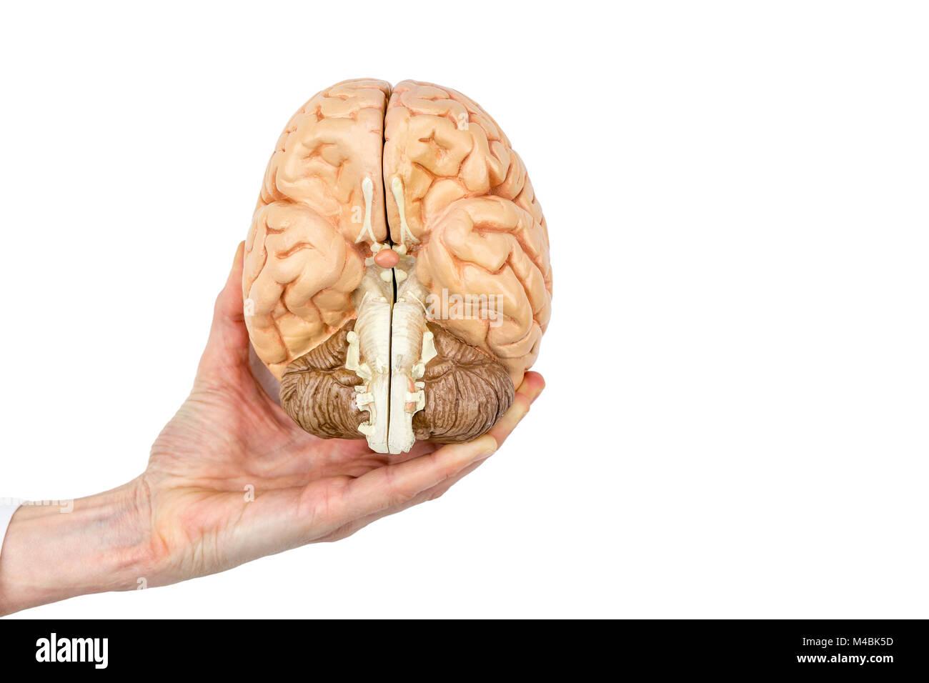 Human Psyche Stockfotos & Human Psyche Bilder - Alamy