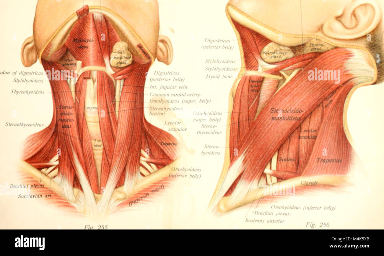 Fein Netter Interaktiver Atlas Der Menschlichen Anatomie Fotos ...