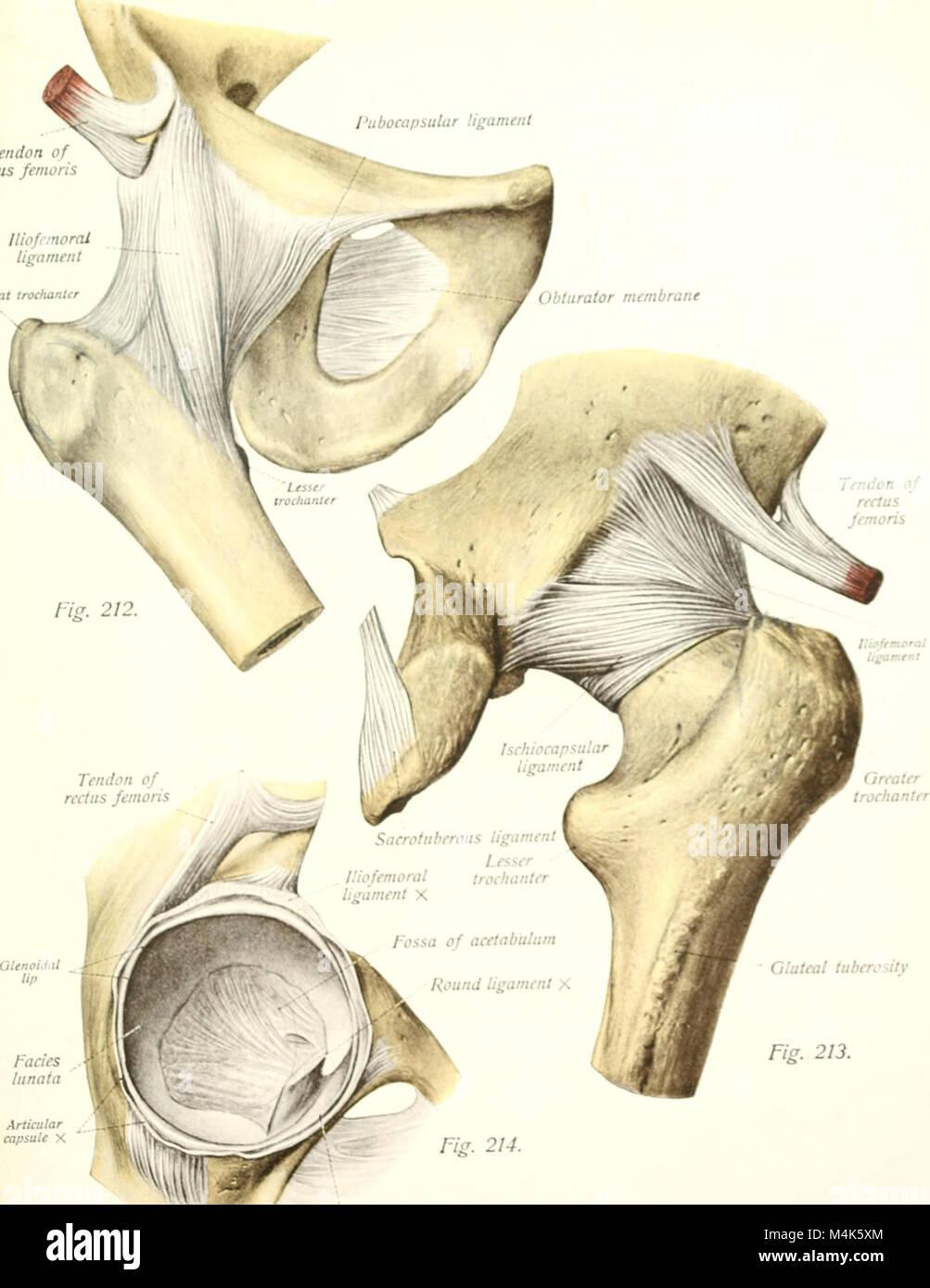 Anatomy Atlas Stockfotos & Anatomy Atlas Bilder - Seite 2 - Alamy