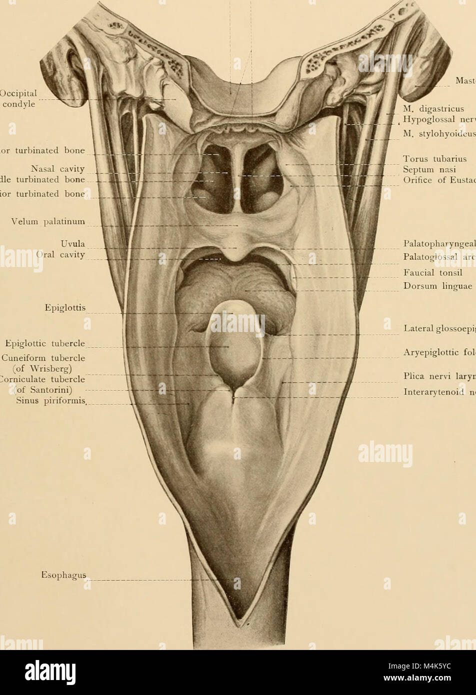 Ziemlich Anatomie Studie Karten Bilder - Menschliche Anatomie Bilder ...