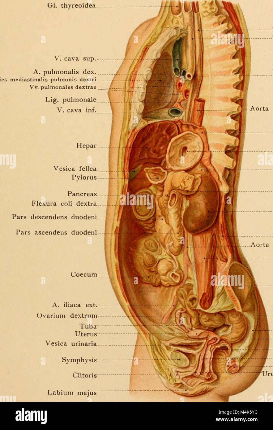 Fantastisch Anatomie Studie Karten Galerie - Menschliche Anatomie ...