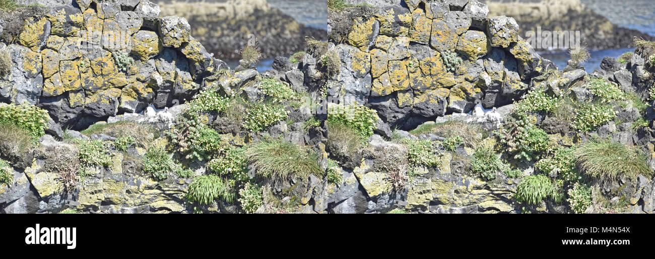Küste und Klippen von Basaltgestein bei Arnarstapi Naturschutzgebiet durch Loch im Felsen gesehen. Snaefellsness Stockbild