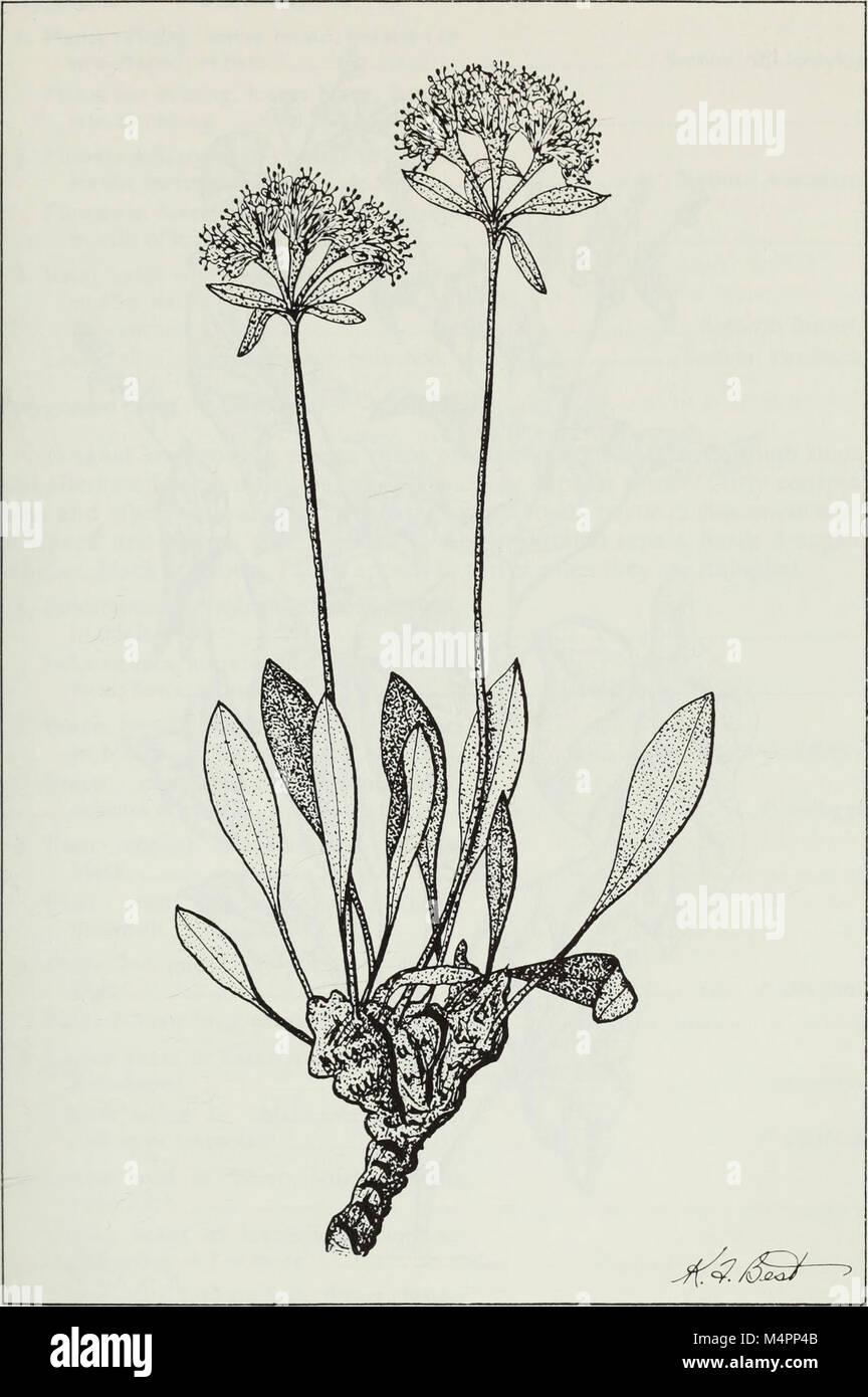Budd's Flora der kanadischen Prärieprovinzen (1987) (20232144538) Stockfoto