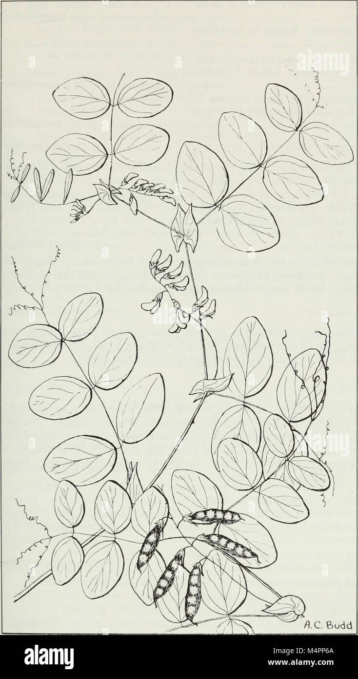 Budd's Flora der kanadischen Prärieprovinzen (1987) (20393984016) Stockfoto
