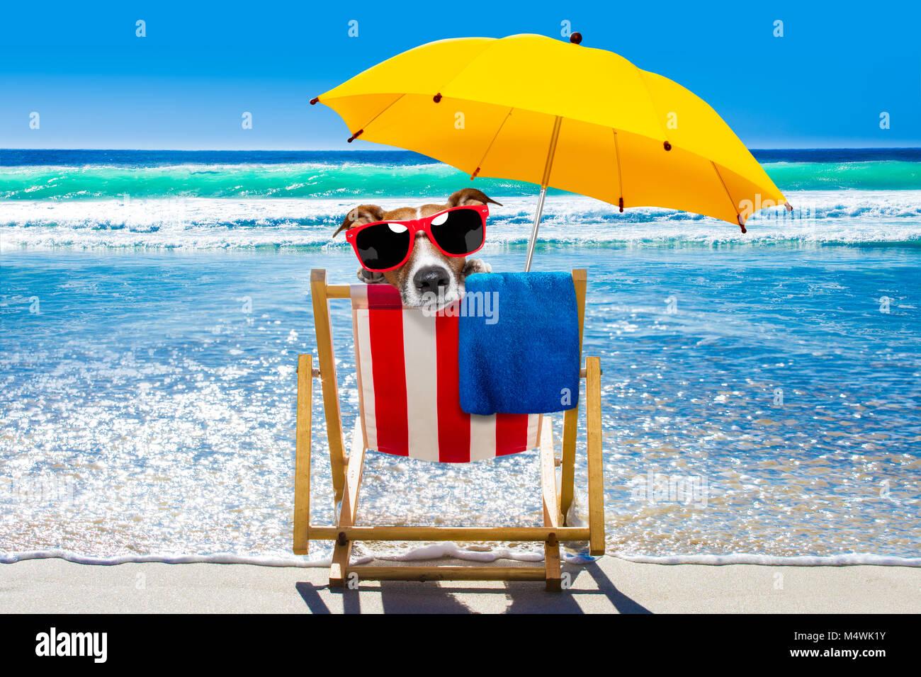 Liegestuhl mit sonnenschirm strand  Jack Russell Hund ausruhen und entspannen auf einer Hängematte oder ...