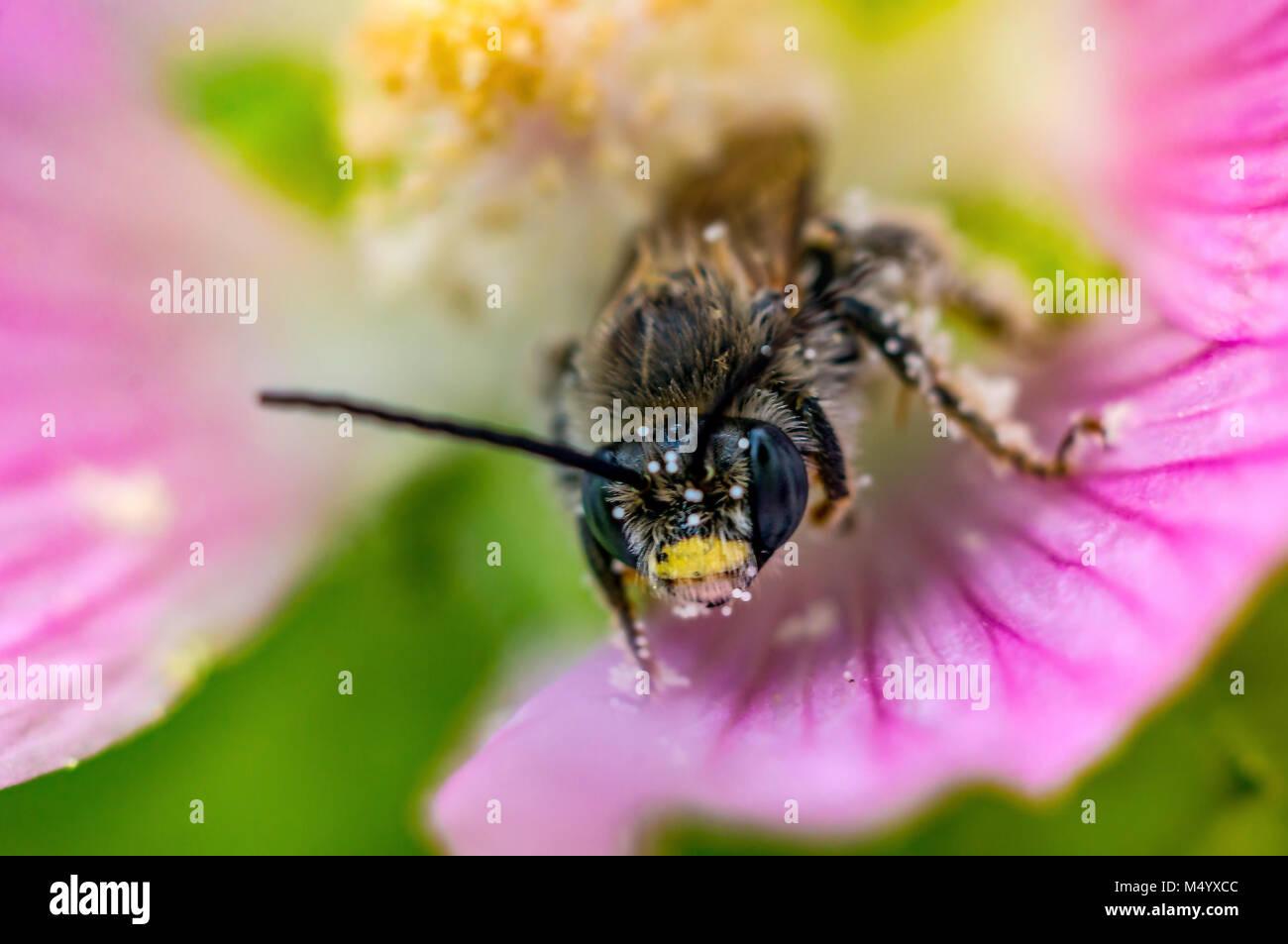 Biene und Blume III super Makro Stockbild