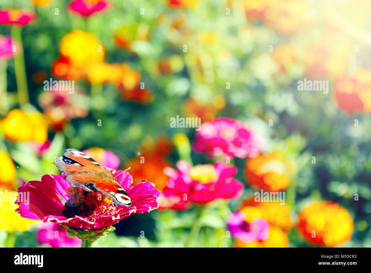 Atemberaubend Färbendes Bild Einer Blume Fotos - Druckbare ...
