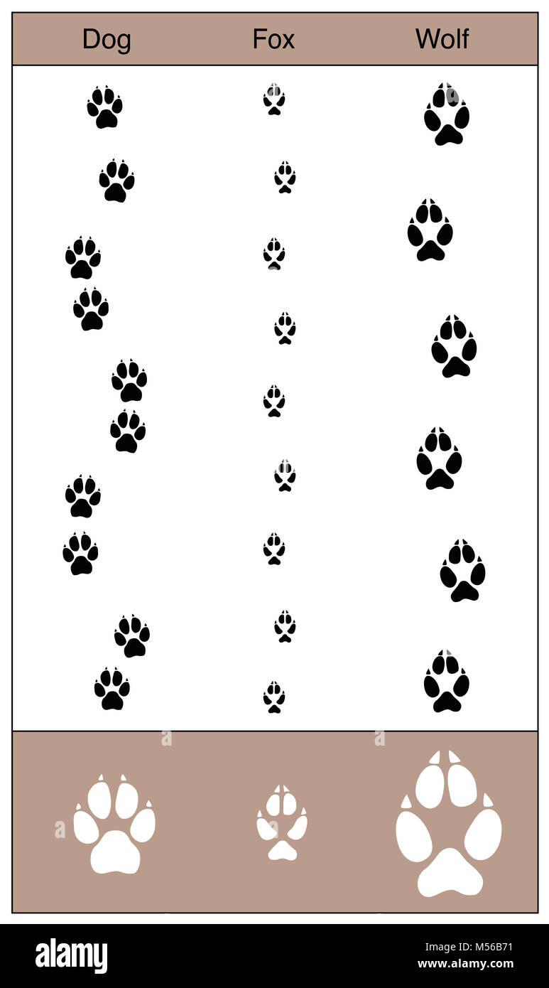 hund fuchs und wolf titel durch vergleich hnlich aussehende spuren von caniden abbildung. Black Bedroom Furniture Sets. Home Design Ideas