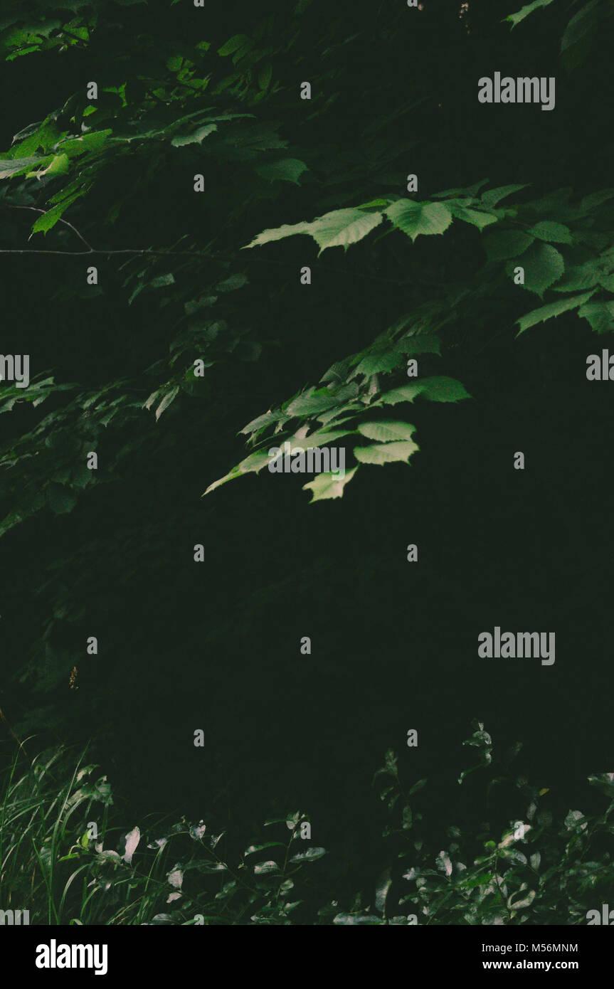 Grüne linden verlässt. Märchen. Mystik. Stockbild