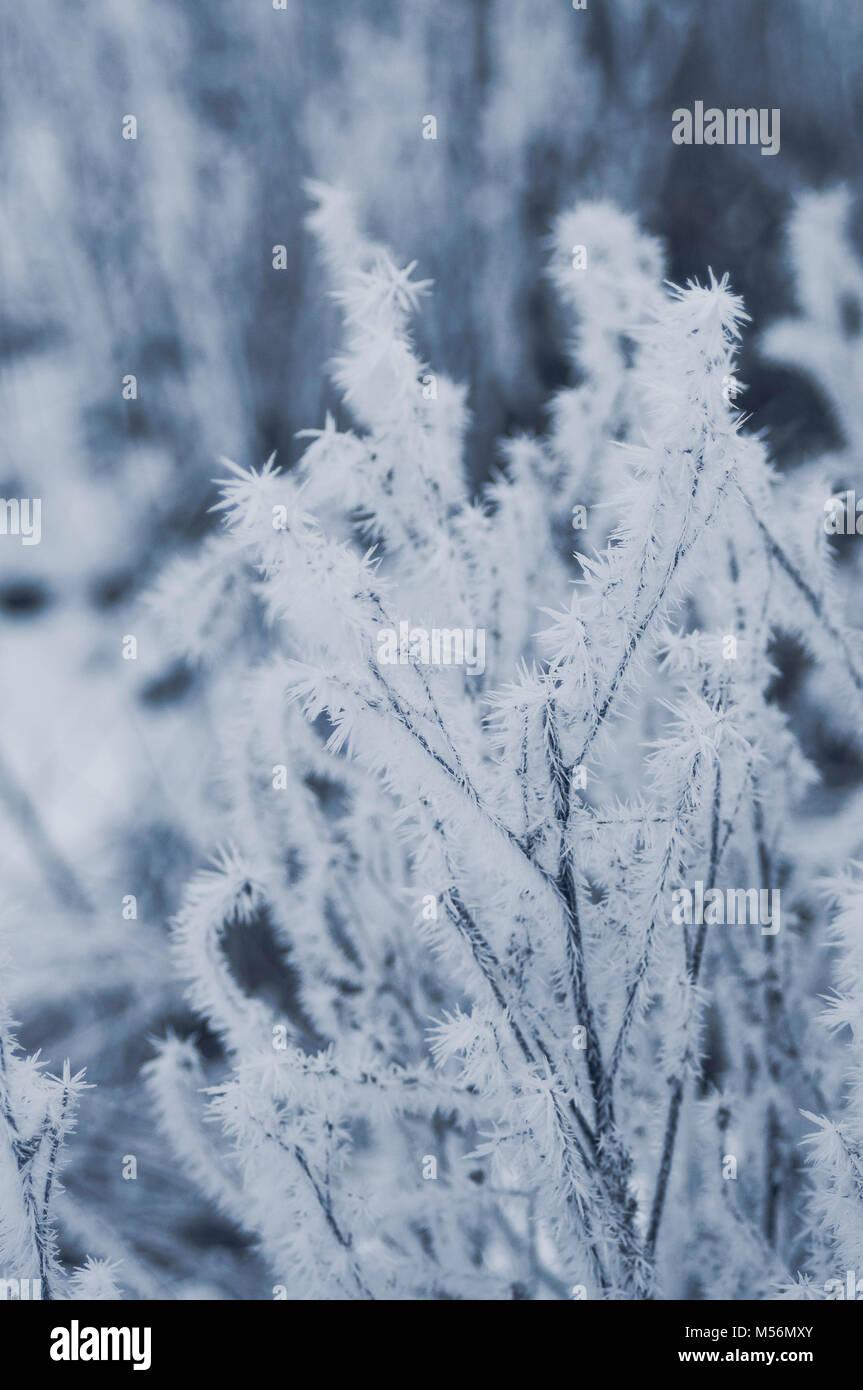 Gefrorene Müsli Feld. Blauer nachmittag Stimmung. Stockbild