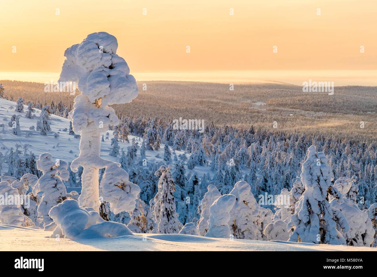 Verschneite Bäume im finnischen Lappland Stockfoto